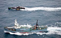 News/03/SeaShepherd2011_3nhp.jpg