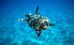 News/04/Caretta_p.jpg