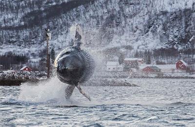 News/06/megattera_norvegia.jpg