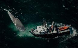 Notizie/07/Blu-whale-p.jpg
