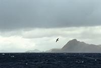 Un albatross volteggia su Capo Horn