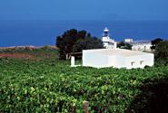 La tenuta Tasca d'Almerita di Capofaro, a Solina, in Sicilia
